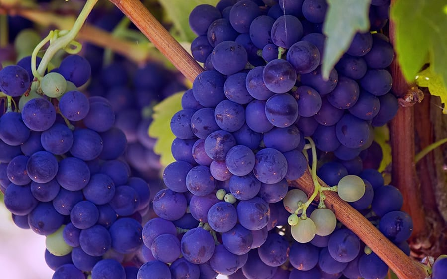 7-reasons-you-should-take-a-Resveratrol-supplement