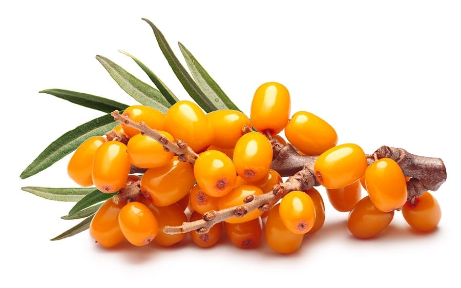 Super-berry-sea-buckthorn-for-antioxidant-and-omega-3-powers