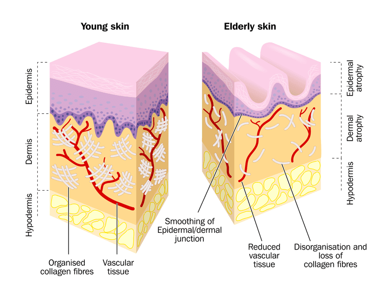 comparison-young-old-skin