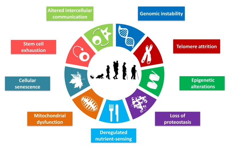 9 indicators of ageing